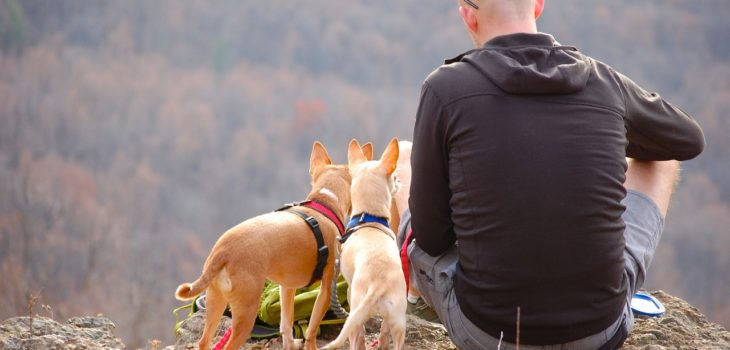 Tips For Overlanding And Camping With Your Pet