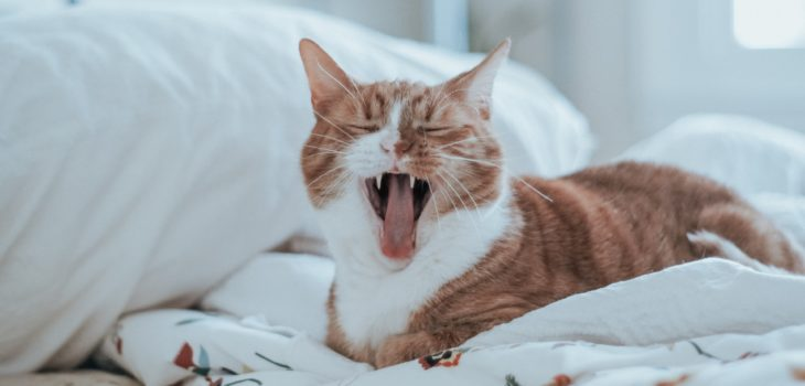 why does my cat yawn so much