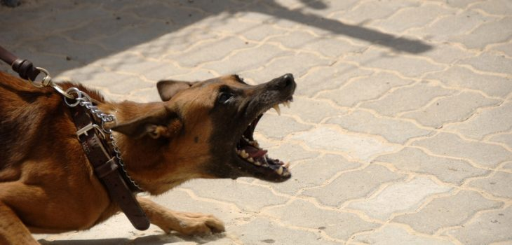 how to know if a dog has rabies