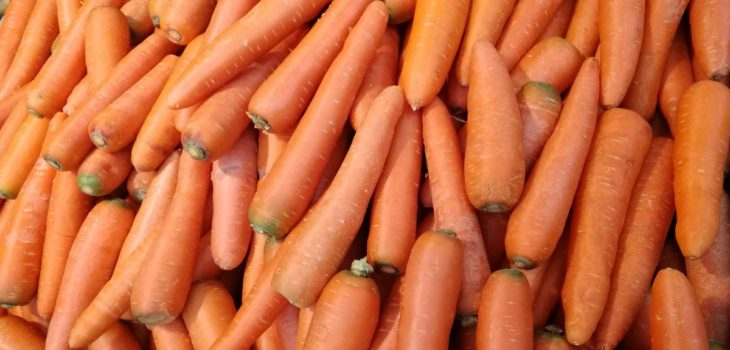 Can horses eat carrot tops