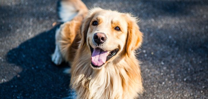 Places in california to visit with a dog