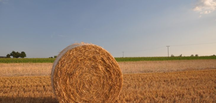 does haylage make horses fizzy