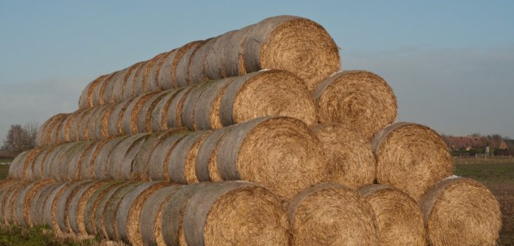 Can Laminitic horses eat haylage
