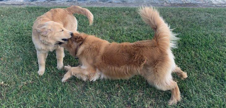 Dog Run Definition